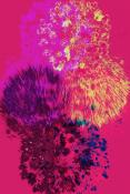 Fleurs d'Artifice - Mounted Print